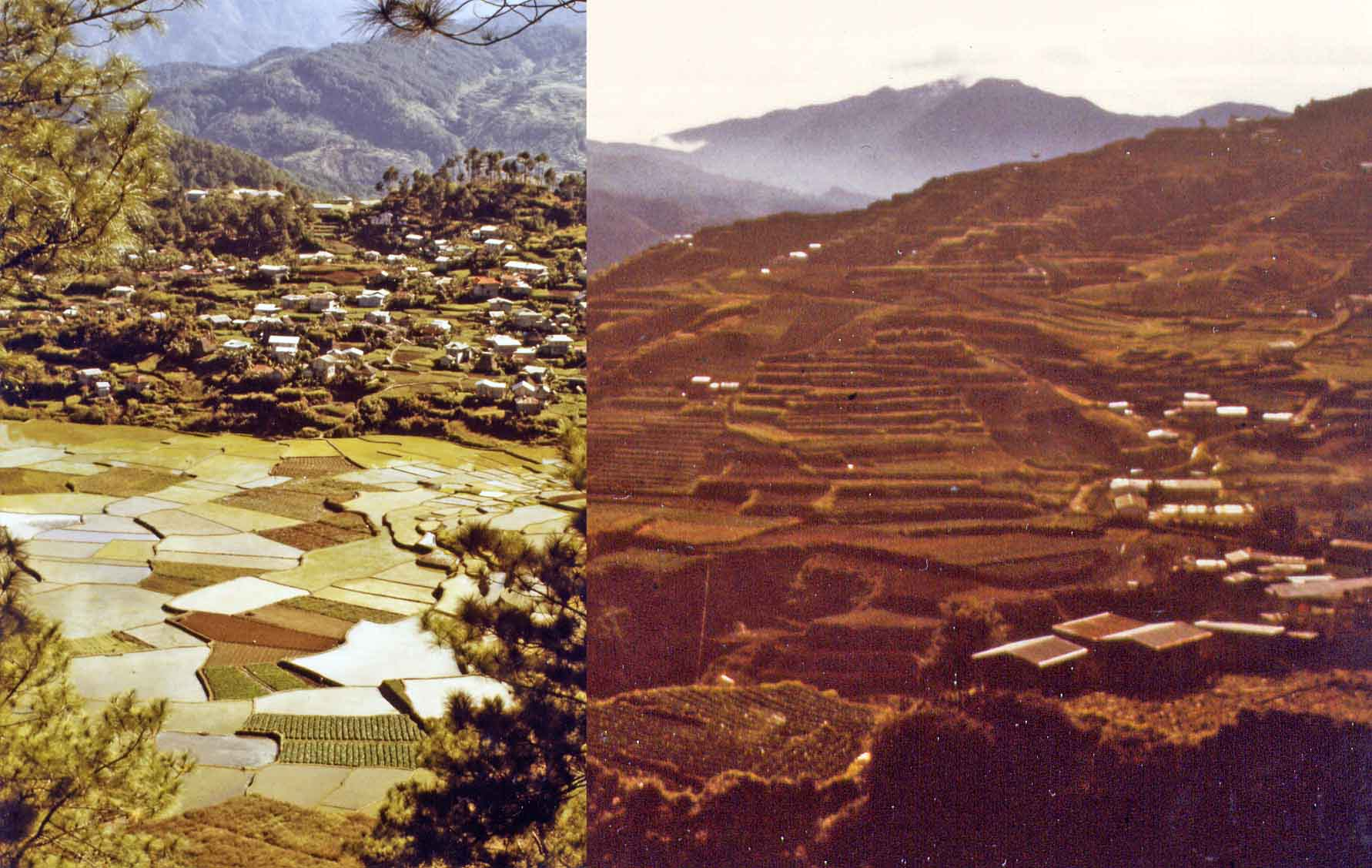 Rice terraces in Sagada