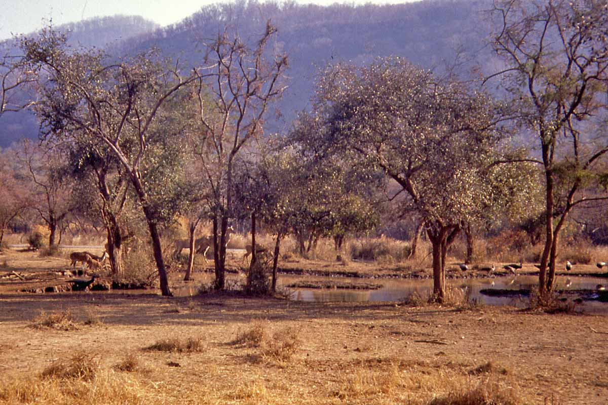 safari in India