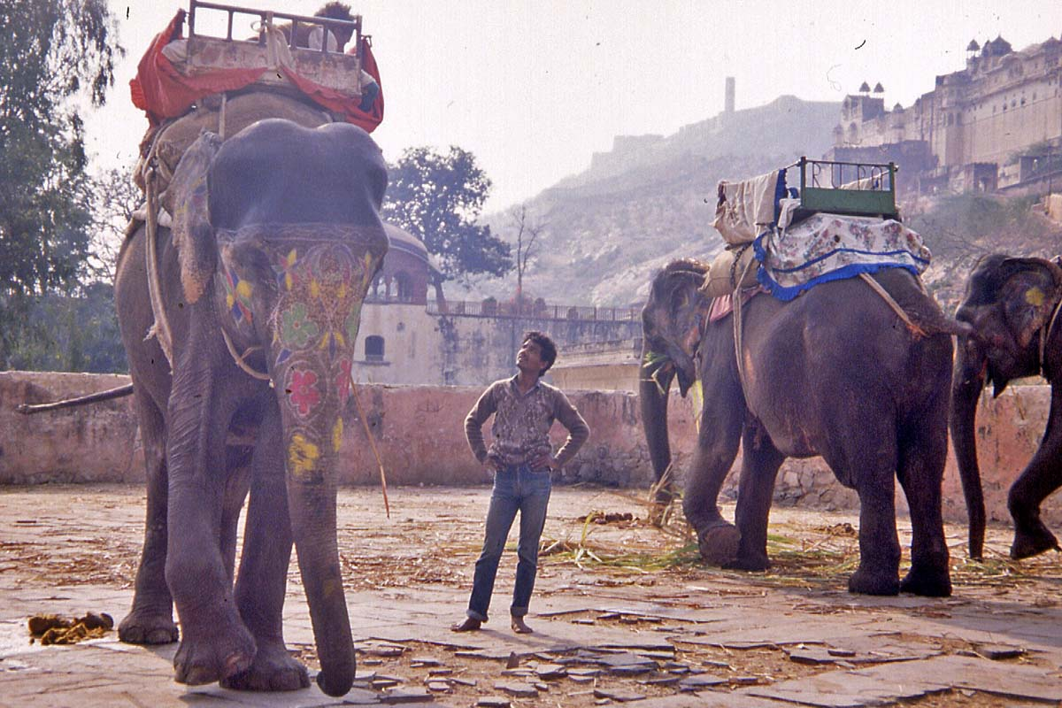 Fort Ajmer India elefants