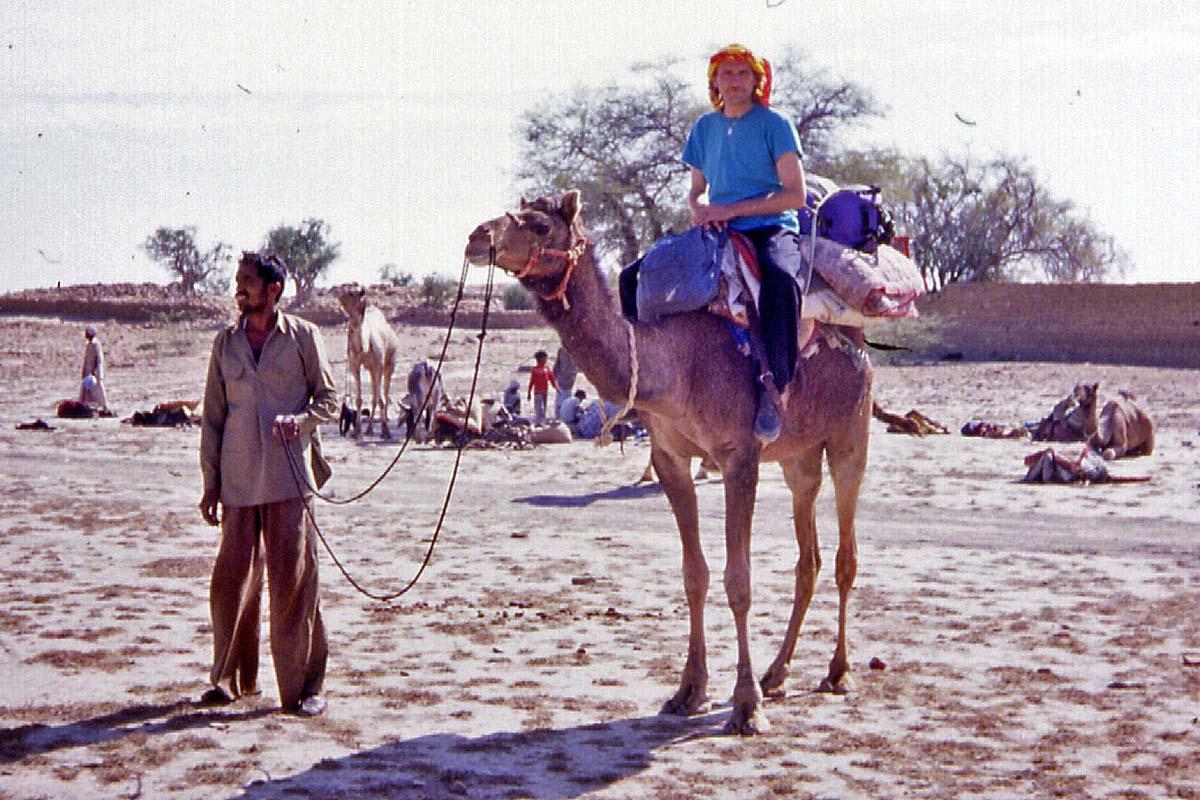 camel in jaisalmer