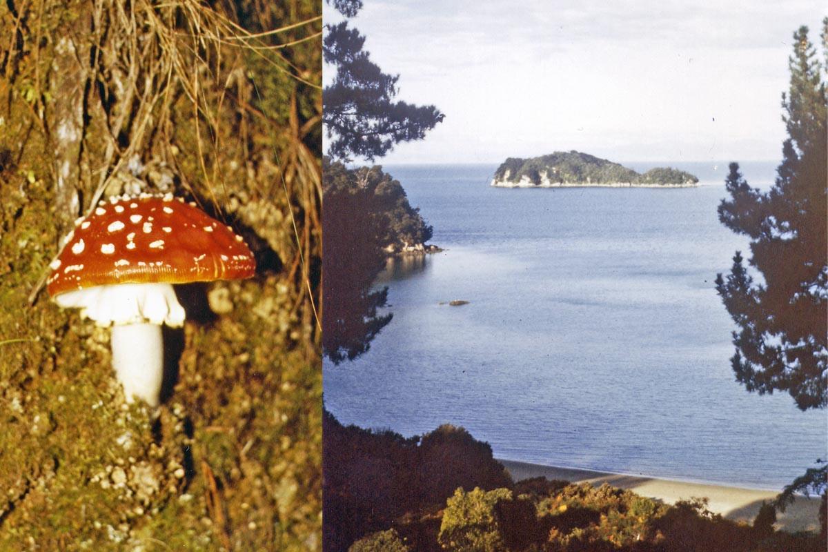 Able Tasman Trek