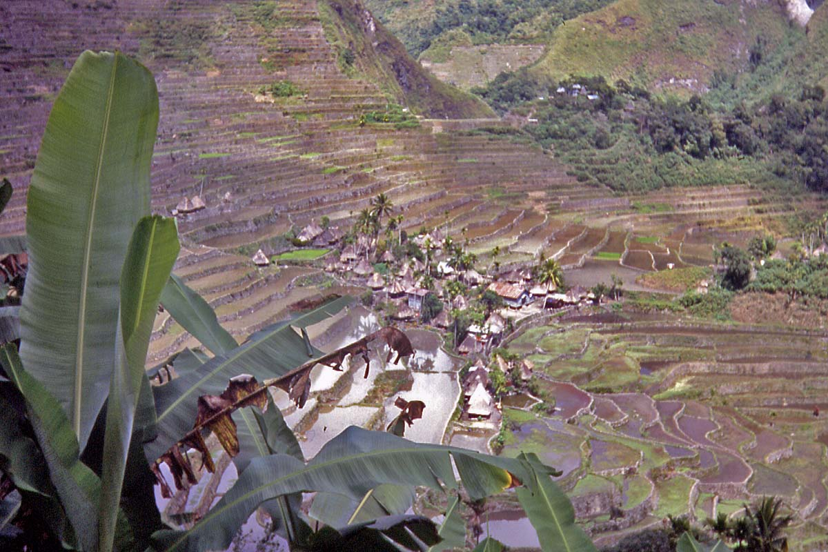 village in rice terraces banaue