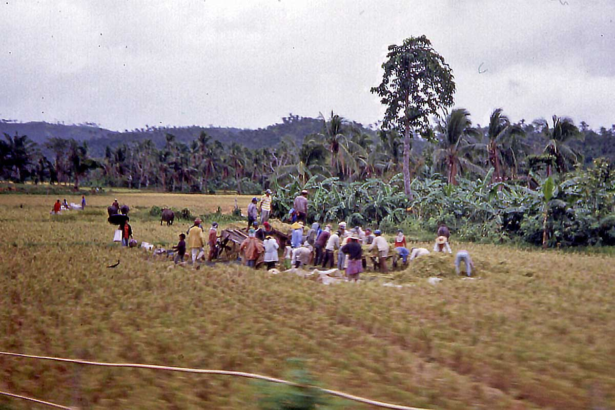 workers in the fields philippines