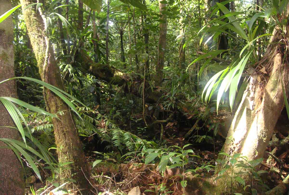 jungle on roseau, Dominica