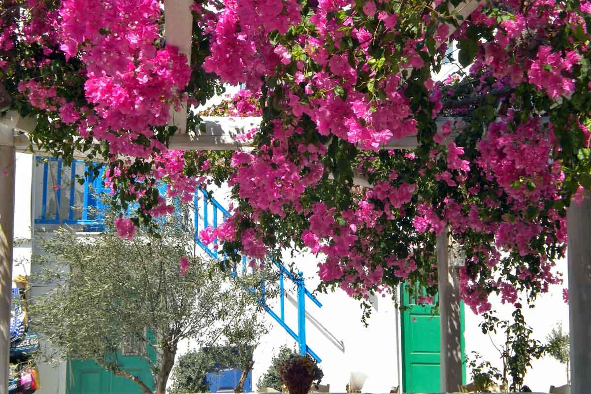 mykonos flowers
