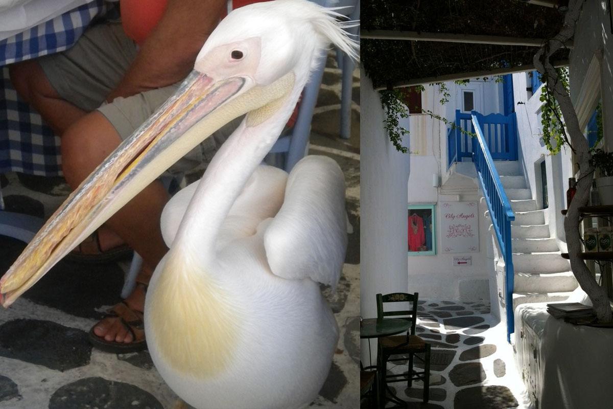 mykonos pelicano