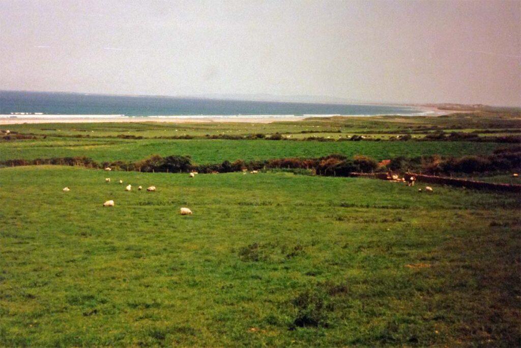 ireland shep